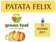 patata Felix 2017