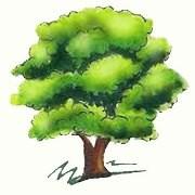 festa dell'albero napoli