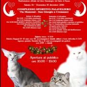 Christmas Cats Festival